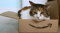Sashimi the cat sitting in an Amazon-branded box.