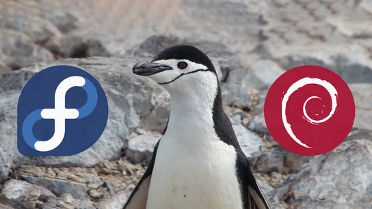 A penguin looking away from the Debian logo and towards the Fedora logo.